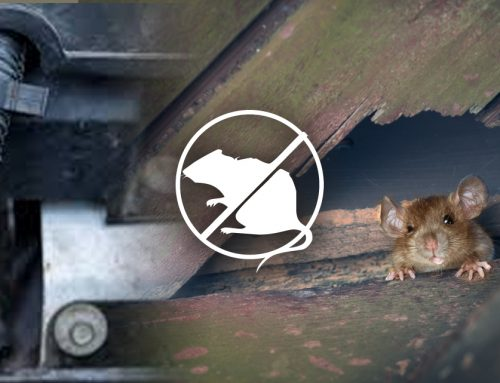 Rodent Proofing Methods | Get Rid of Rats