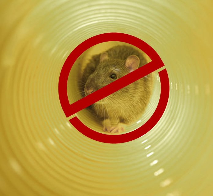 prevent rats from coming up the toilet