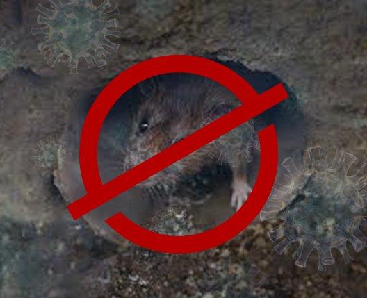 do rat flaps work