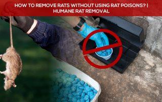 humane rat removal