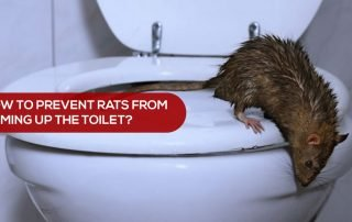 rodent-proof your home
