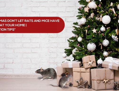 This Christmas Don't Let Rats and Mice Have All The Joy at Your Home | Rat Prevention Tips