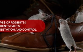 rodent infestation and control