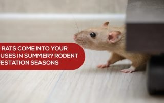 Do Rats Come into your houses in Summer