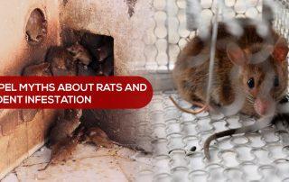 Dispel Myths About Rats